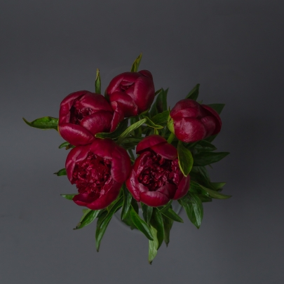 5 Красных Пионов фото