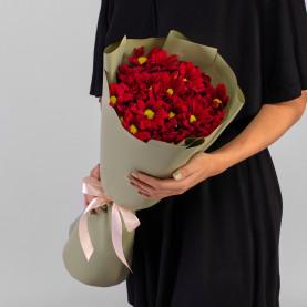 5 Красных Кустовых Хризантем Ромашка фото