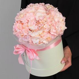 5 Розовых Гортензий в коробке фото