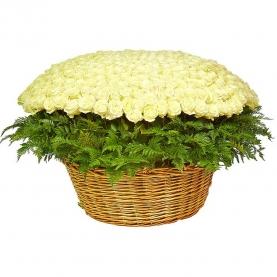 501 Белая Роза (50 см.)