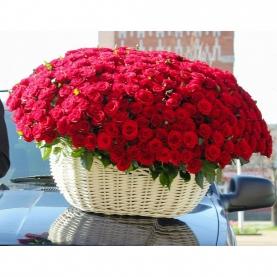 501 Красная Роза (40 см.) фото