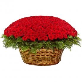 501 Красная Роза (50/60 см.) фото