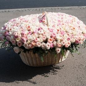 501 Пионовидная Роза (50/60 см.) фото