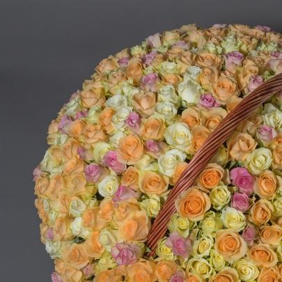501 Разноцветная Роза фото