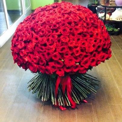501 Красная Роза фото