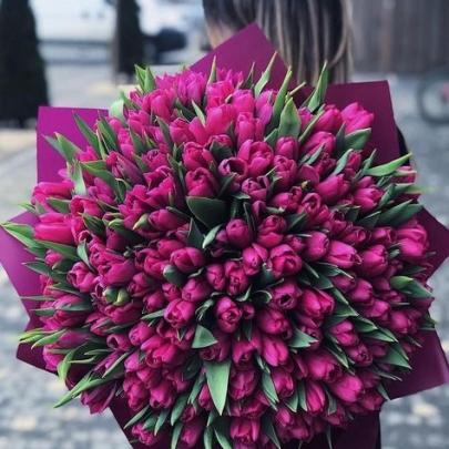 505 Малиновых Тюльпанов фото