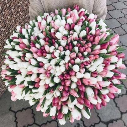 505 Тюльпанов Микс фото