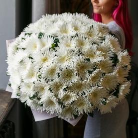 51 Белая Игольчатая Хризантема фото