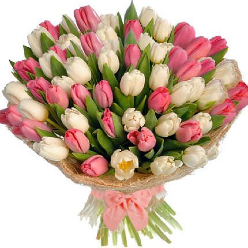 51 Бело-Розовый Тюльпан фото