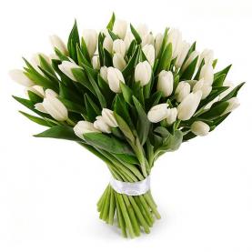 51 Белый Тюльпан фото