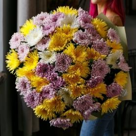 51 Цветная Игольчатая Хризантема фото