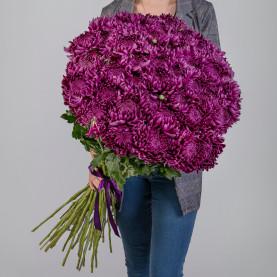 51 Фиолетовая Хризантема Бигуди фото