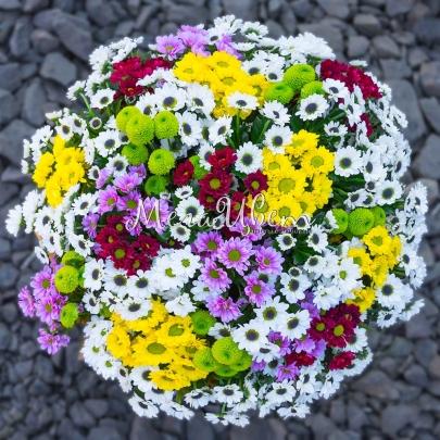 51 Хризантема мелкая фото