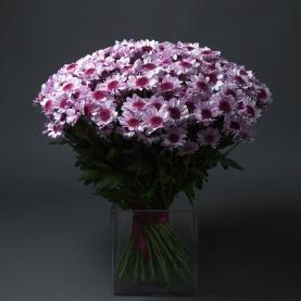 51 Светло-Сиреневая Хризантема Кустовая фото