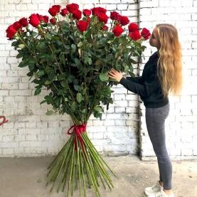 51 Красная Роза (180-200 см.) фото