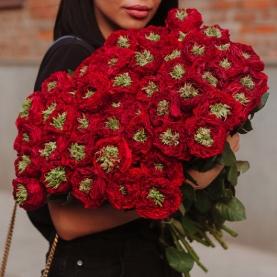 51 Красная Роза пушистая фото