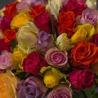 51 Разноцветная Роза фото