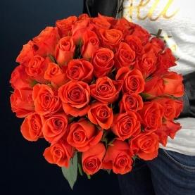 51 Роза Patz (40 см.) фото