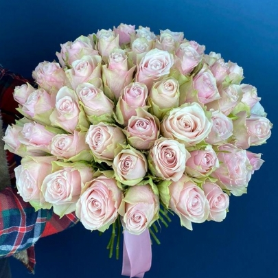 51 Роза Pink Athena (40 см.)