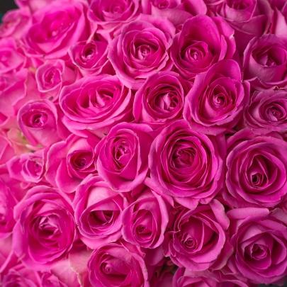 51 Розовая Роза фото
