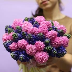 51 Синий и Розовый Гиацинт фото