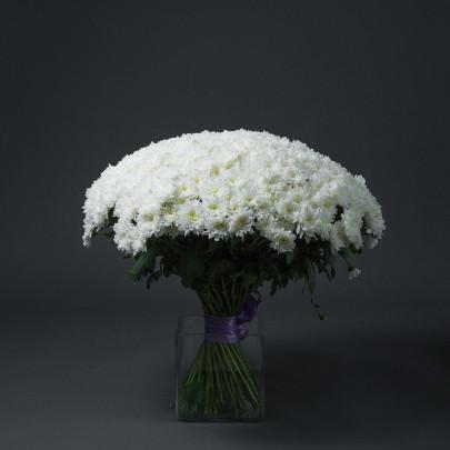 65 Белых Хризантем Кустовых фото
