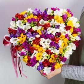 65 Разноцветных Фрезий фото