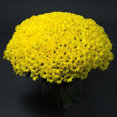 65 Желтых Хризантем Кустовых сантини фото