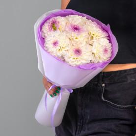 7 Бело-Фиолетовых Георгинов фото