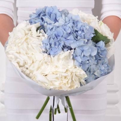 7 Бело-Голубых Гортензий фото