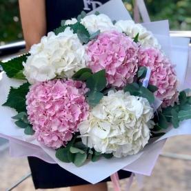 7 Бело-Розовых Гортензий фото