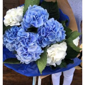 7 Бело-Синих Гортензий фото