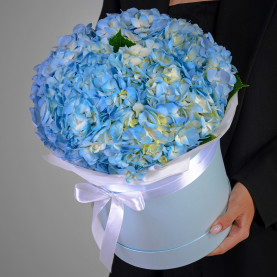 7 Голубых Гортензий в коробке фото