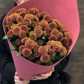 7 Рыжих Хризантем Кустовых фото