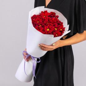 7 Красных Кустовых Хризантем Ромашка фото