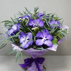7 Орхидей Ванда фото