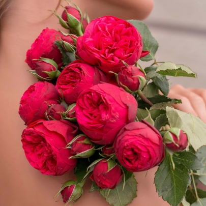7 Красных Роз Кустовых Пионовидных фото