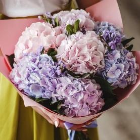 7 Розово-Сиреневых Гортензий фото