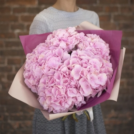 7 Розовых Гортензий фото