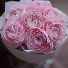 7 Розовых Ранункулюсов фото