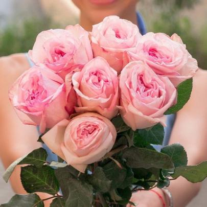 7 Пионовидных Роз Pink Ohara (50 см.) фото