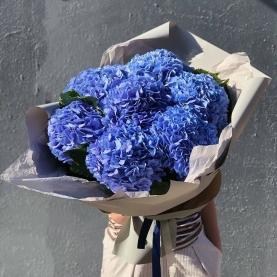 7 Синих Гортензий фото