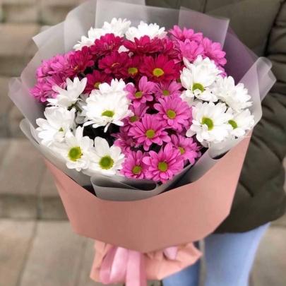 7 Весенних Хризантем фото