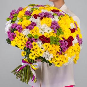 75 Кустовых Хризантем Ромашка Микс фото