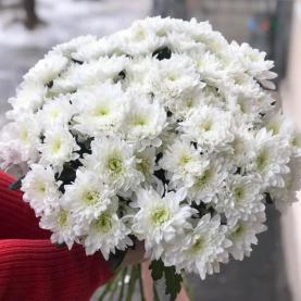 15 Кустовых Хризантем Baltica фото