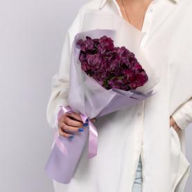 9 Фиолетовых Альстромерий фото