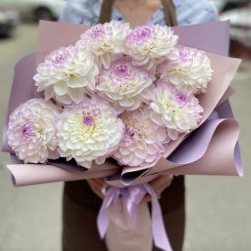 9 Георгинов Sweet Love фото