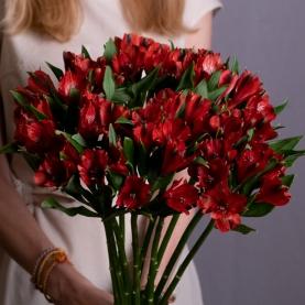 9 Красных Альстромерий фото