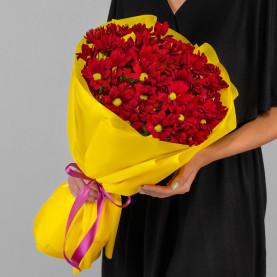 9 Кустовых Хризантем Ромашка Красных фото