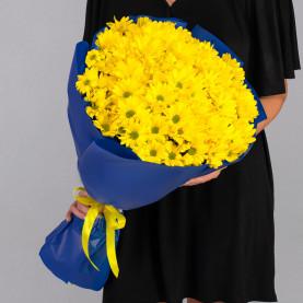 9 Кустовых Хризантем Ромашка Желтых фото